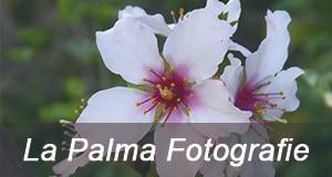 La Palma Fotografie