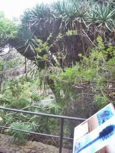 Im Außenbereich können sich die BesucherInnen an Tafeln entlang des Rundwanderwegs über die Fauna und Flora des Barrancos informieren.