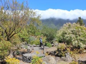 Praxis: Im Garten des Besucherzentrums kann man zwischen vielen endemischen Pflanzen von La Palma spazierengehen.