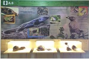 """Theorie: Im Innern des Besucherzentrums Los Tilos gibt es Informationen zu Tieren und Pflanzen im """"Märchenwald"""". Mehr als 80.000 Gäste erhalten hier jedes Jahr Auskunft über das Ökosystem aus dem Tertiär, das wie die ganze Insel La Palma zum Weltbiosphärenreservat erklärt wurde."""