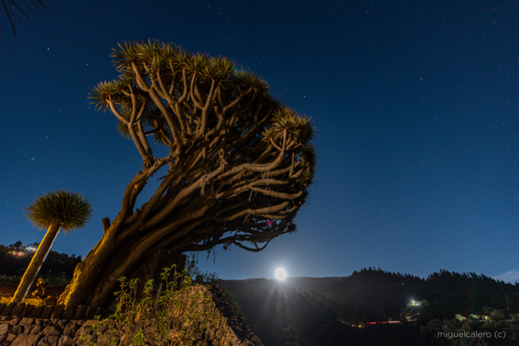 Mega Schnappschuss. Eine Aufnahme des palmerischen FotografenMiguel Ángel Pérez Calero wurde jetzt Earth Science Picture of the Day: Die Universities Space Research Association entschied sich für sein Foto, weil es ihm gelang, den aufgehenden März-Vollmond hinter einem alten Drachenbaum in Puntagorda ins Bild zu bannen. Mehr darüber auf der Website des Verbandes.https://epod.usra.edu/blog/2019/04/dragon-trees-of-la-palma-island-and-full-moon-of-march-19-2019.html?fbclid=IwAR3o-kJAJmOYFUfad2xidtXGwsP9Q1e-dN-JO2vjaPEQZjP9WOpaGRxauuU