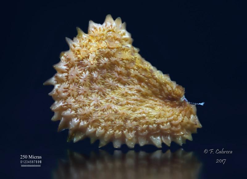 facundo-cabrera-semilla-800-7