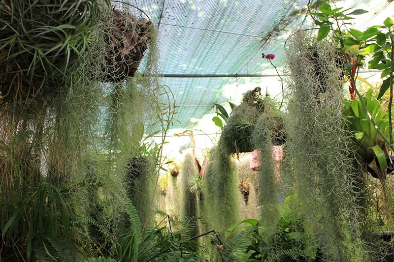 Magisch: Das Orchideenhaus von Karin - kein Zweifel, die gelernte Topf
