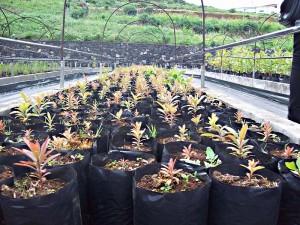 Vivero Puntallana: Verkauf gefährdeter Pflanzen von der Insel. Foto: La Palma 24
