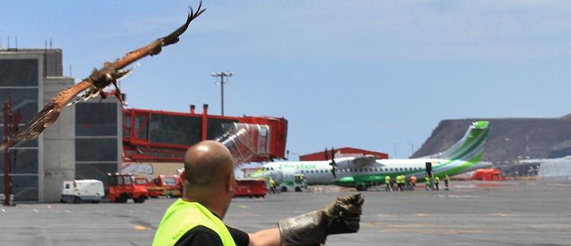 bussard-airport-spc-anflug-fernando-800