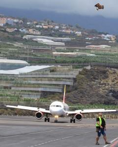 """Die Iberia ist sicher gelandet: Die Luft war """"rein"""", denn Fernando und einer seiner Wüstenbussarde haben geflügelte Störenfriede aus dem Luftraum des Airports SPC zuvor erfolgreich vertrieben. Foto: La Palma 24"""
