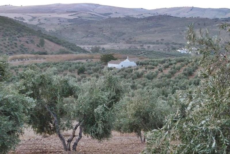 Puerto Serrano in Andalusien: Von hier kommt das Olivenöl, das Jesús auf La Palma vertreibt. Foto: Ramón Bejarano