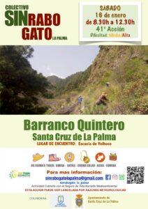 Freiwilligenaktion zur Entfernung des Rabogato in Santa Cruz de La Palma